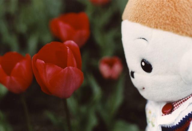 お客様からプリモプエルのお写真を頂きました。 プリモプエルのぽむちゃんのお写真です。